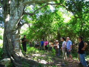Las Terrazas – Sierra del Rosario Biosphere Reserve - Cuba Cultural Trips