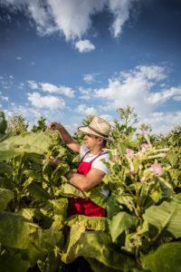 Farmer in Viñales, Cuba